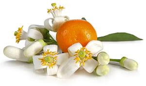 fleur-oranger.jpg